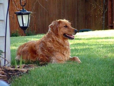 Keeping an eye on the backyard