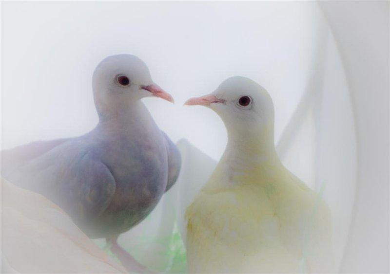 Easter Doves 50581 Large.jpg