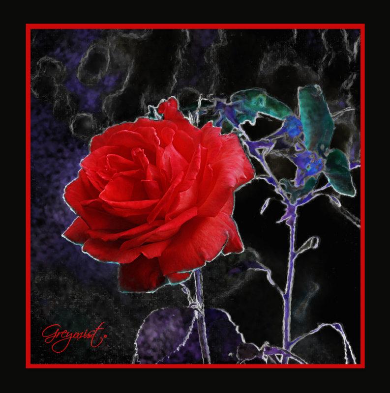 art-392 Summer Rose