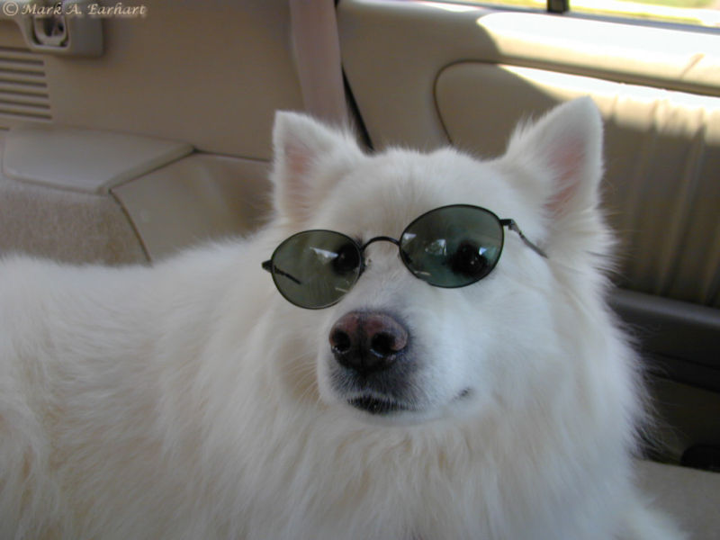 Cool Canine