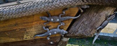 Boat, crawling with Crocodilians