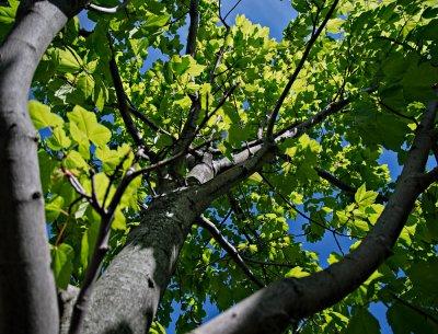 Tree in sunlight #2