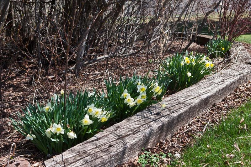 6413 Signs of spring