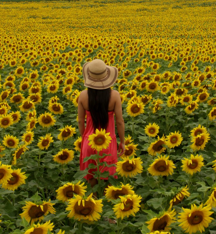 Lost in Sunflowers.jpg
