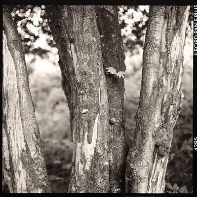 Roll 26: Tree trunks
