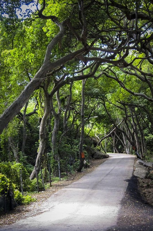 lane on Curacao