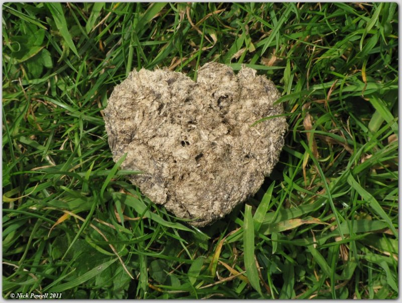 Love is a heart shaped cow pat!