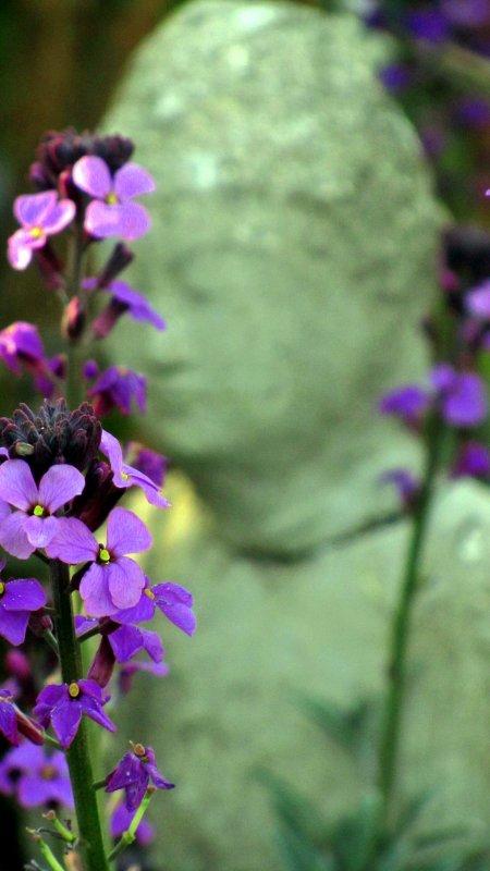 The watcher of the garden.jpg