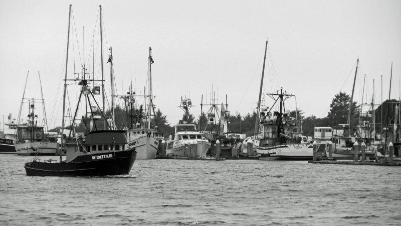Humboldt Bay Harbor.jpg