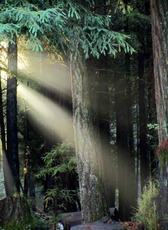Sherwood Forest Sun Rays.jpg
