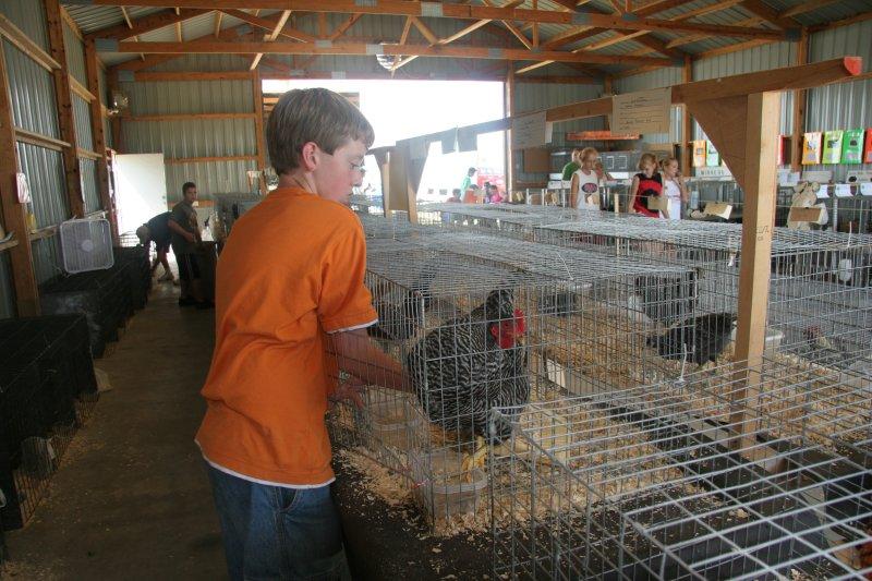 chickencapture.jpg