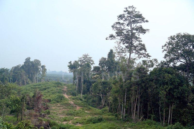 KL-Kuantan Highway scenery