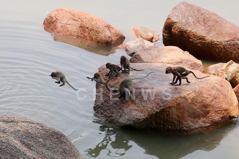 Monkeys at Teluk Cempedak