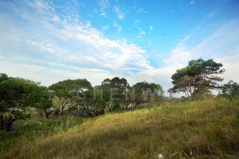 Mangroves and grassland in Rantau Abang, Terengganu