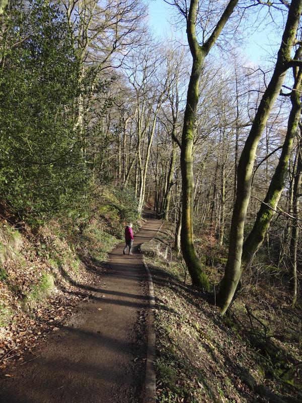 Sunny woods.jpg