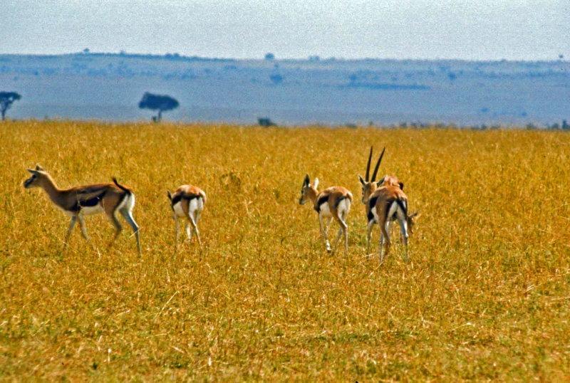 Kenya-351.jpg