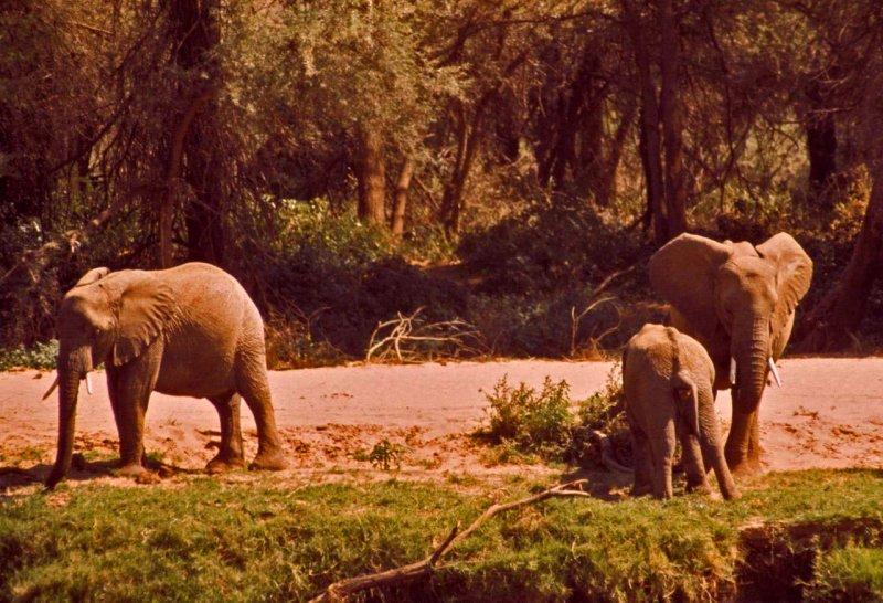 Kenya-467.jpg