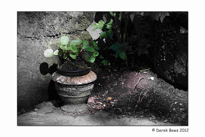 Discarded Plant Pot