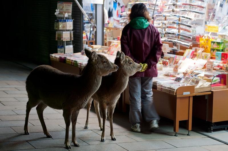 Nara-Rurie