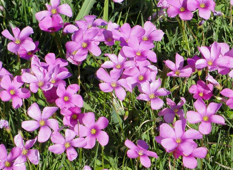 Flowers In Rosedal Garden