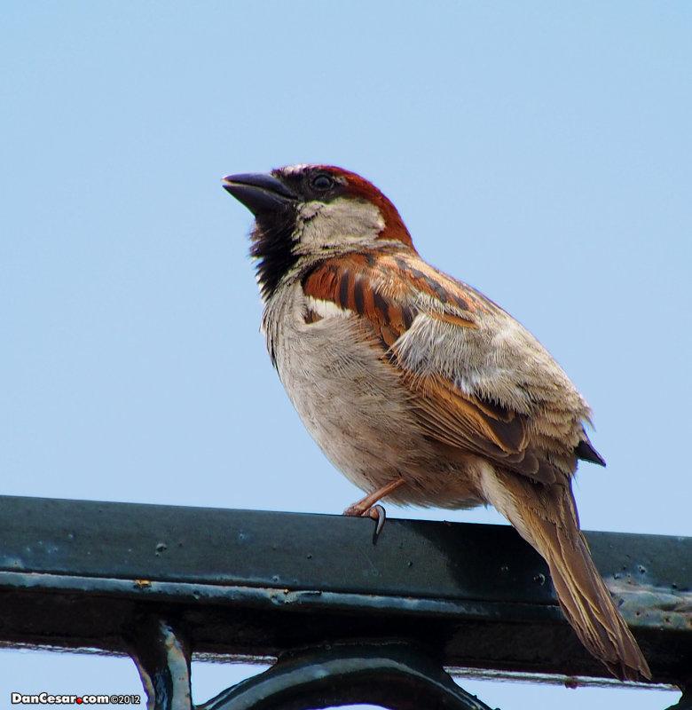 Bird On The Plaza