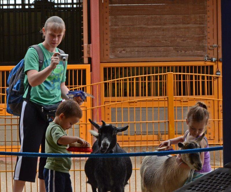 Cepillando a las cabras