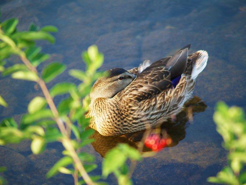 Nestled Beak