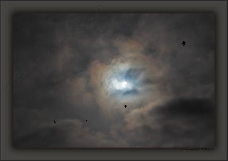 2012 Annular Solar Eclipse From Santa Monica - And, The Ravens Came Out To Play