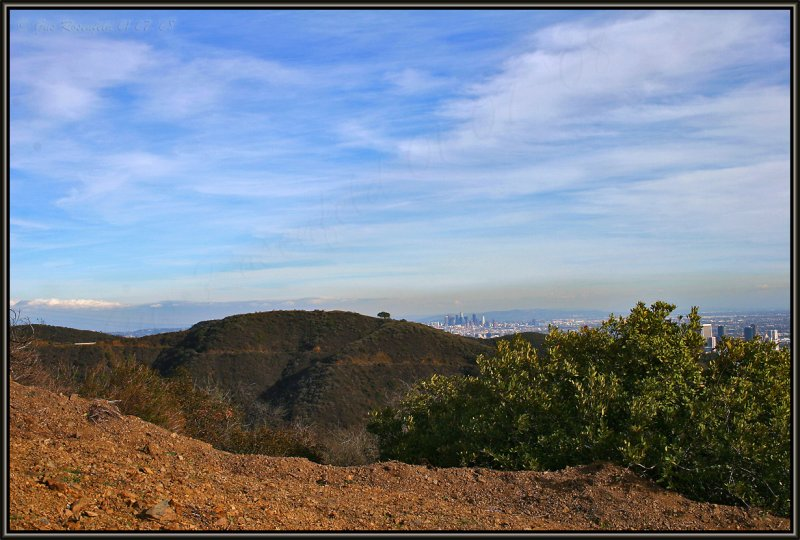 From Left: Mother Oak, Los Angeles and Century City Peeking Out Behind The Toyan/Cali Holly