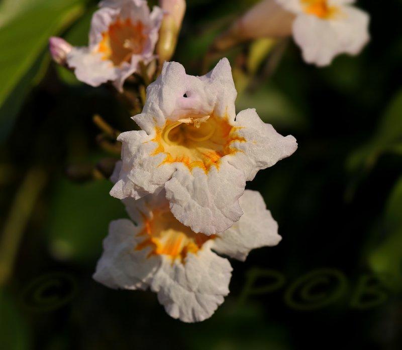Blossem