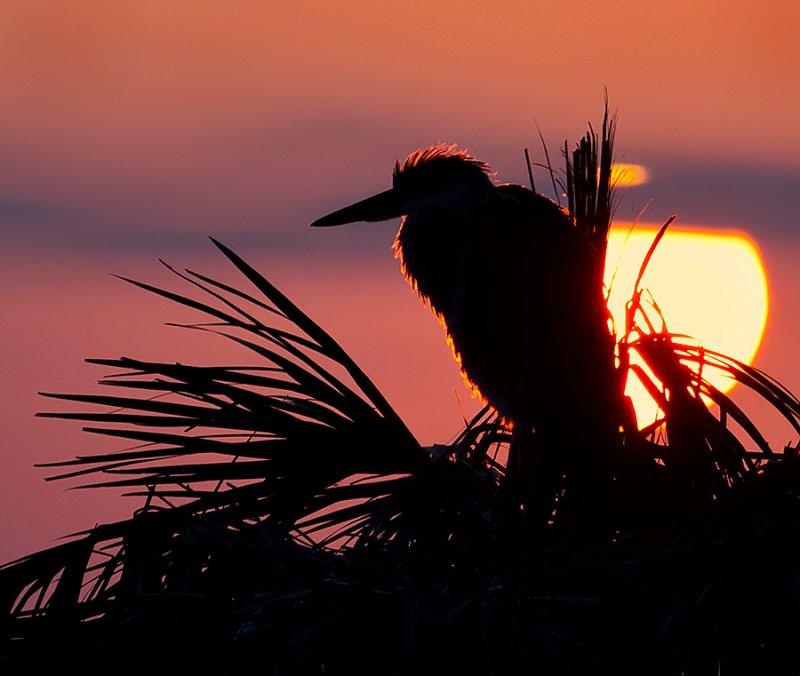 Heron glow