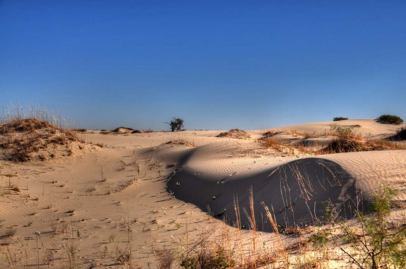 Dunes and a lonely tree