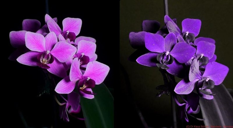 UV Achromat 84mm with focal reducer cropped_c.jpg