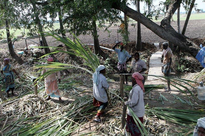 1264 - South India 2 weeks trip - 2 semaines en Inde du sud - IMG_9507_DxO WEB.jpg