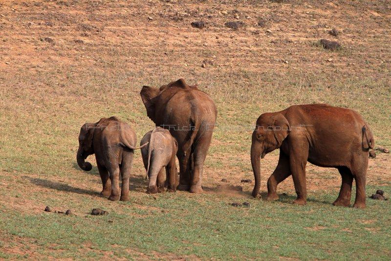 2419 - South India 2 weeks trip - 2 semaines en Inde du sud - IMG_0701_DxO WEB.jpg