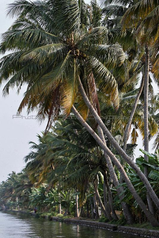 2966 - South India 2 weeks trip - 2 semaines en Inde du sud - IMG_1272_DxO WEB.jpg
