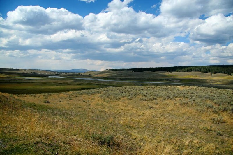 Meadow, Yellowstone National Park