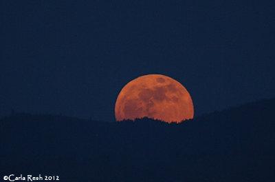 Its Friday....Howl at the Moon!