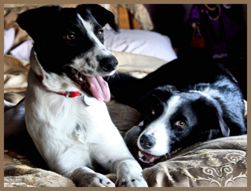 FIRST DAY TOGETHER.  Drews new little sister, Betty White.  8 months old.  She is an Aussie shepard/collie mix.