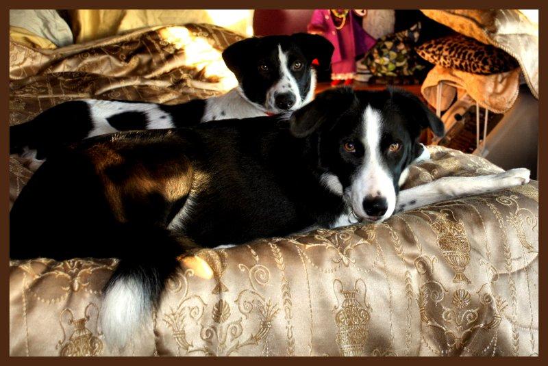 good morning pups.jpg