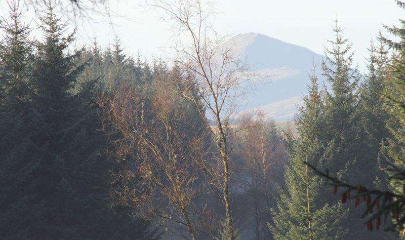 Ben Lomond from Garadhban Forest
