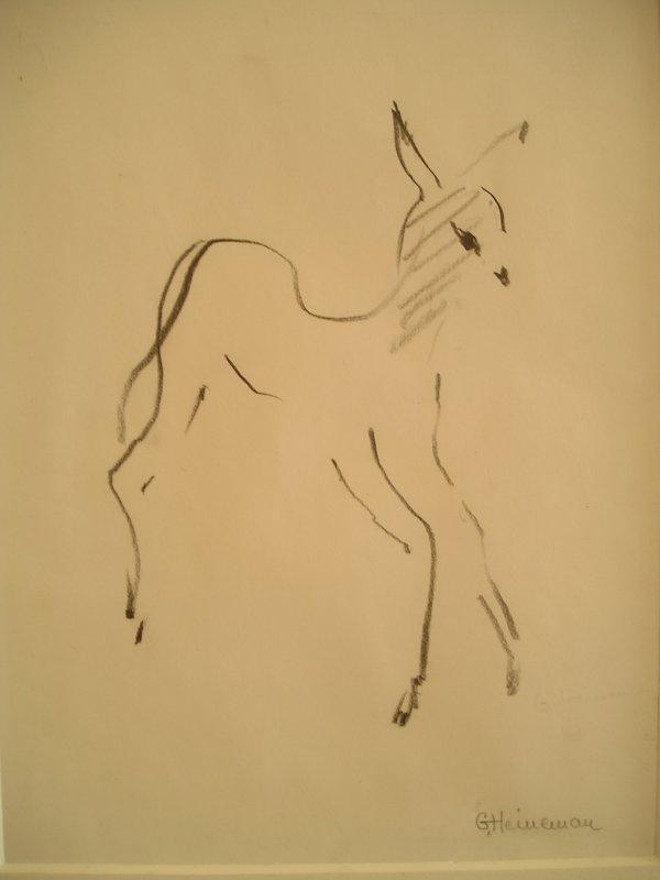 rådjur, teckning, av Gunnel Heineman
