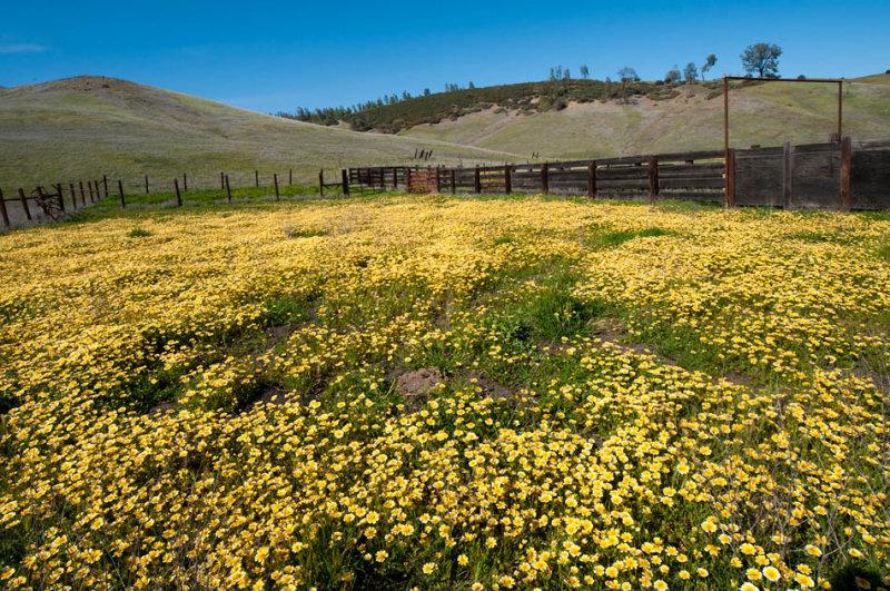Bear Valley 2012