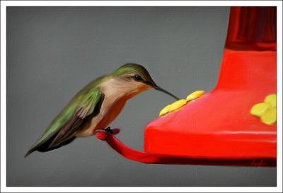 May 6, 2006 - Hummingbird