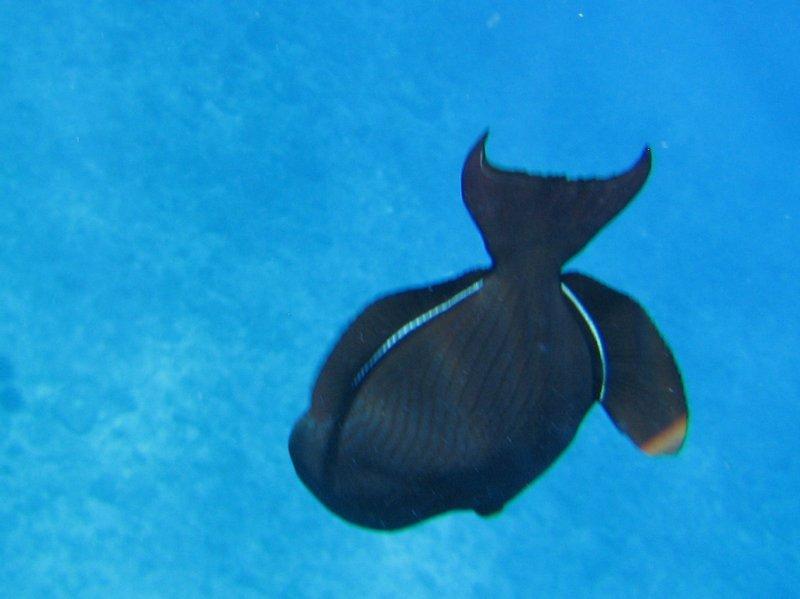 Snorkel sights