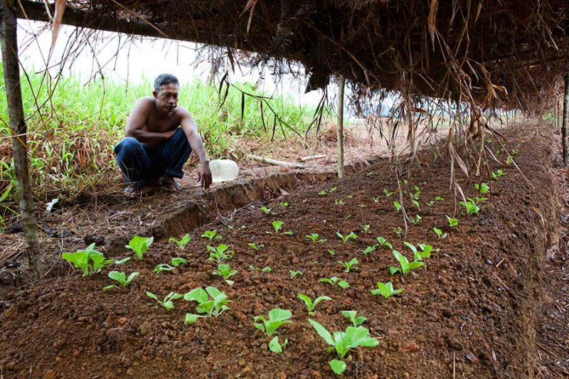 A covered area for growing Chinese cabbage. IMG_4981.jpg