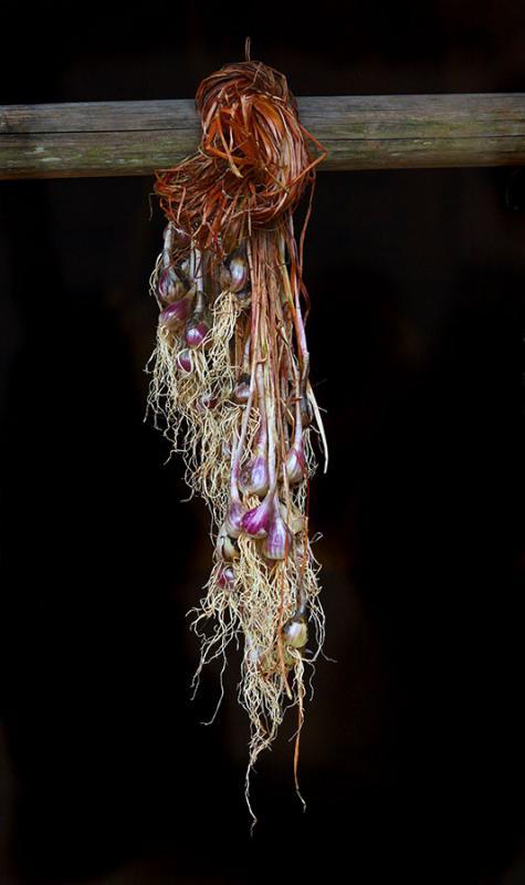 Hanging garlic.
