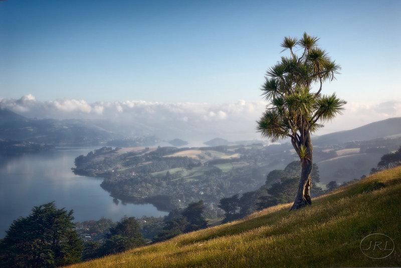 View down Otago harbour