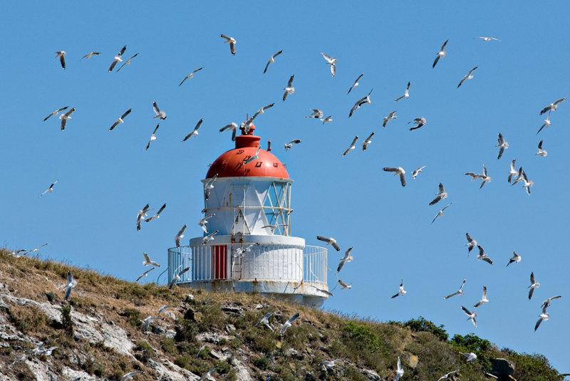 A Flock of Gulls