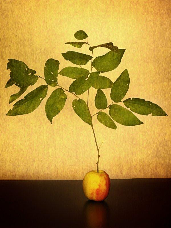 My Apple Tree